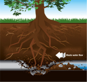 How To Fix Tree Root Intrusion In Your Pipes Kelowna